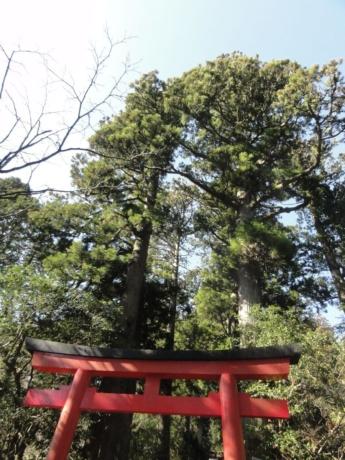 2020 03 18 Hakone 19