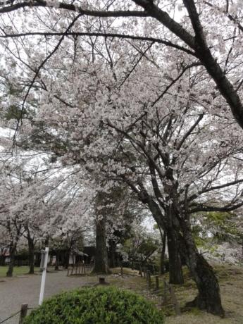 2020 03 29 Kumamoto 39