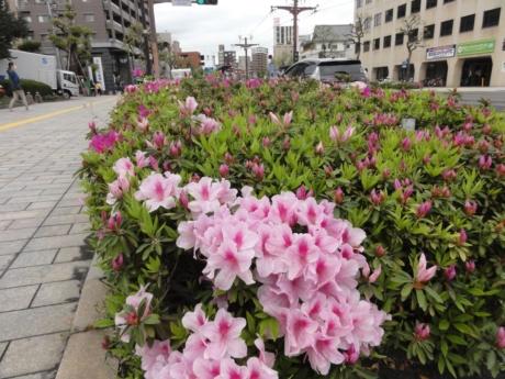 2020 03 31 Kagoshima
