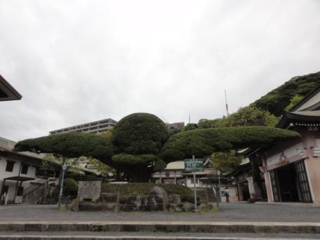 2020 03 31 Kagoshima 05