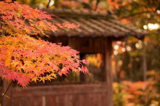 feuilles automne Japon