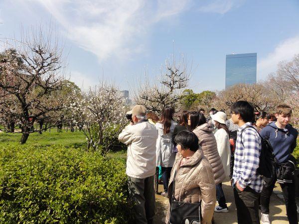 Photographes autour d'un prunier