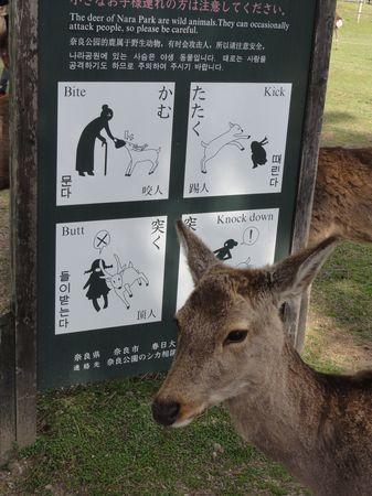 Daim et panneau attention aux daims dans le parc de Nara, au Japon