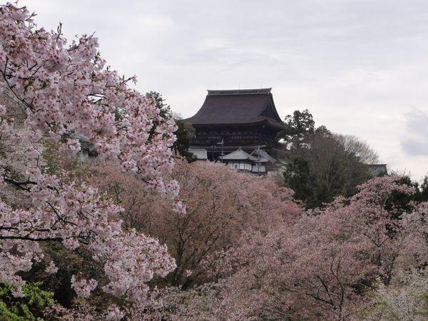Temple Kinpusen-ji entouré de sakura, à Yoshino, au Japon