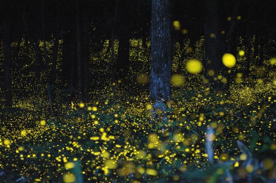 20150606 lucioles japon