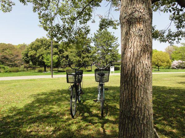 Vélos sous un arbre