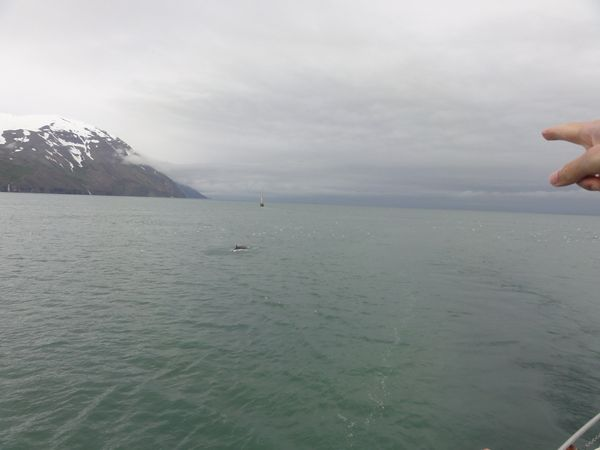 Baleine dans la baie d'Husavik en Islande