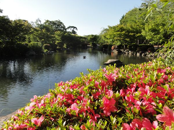 Jardin du temple Toji, Kyoto