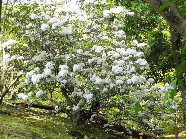 Jardin Isui-en près de Nara