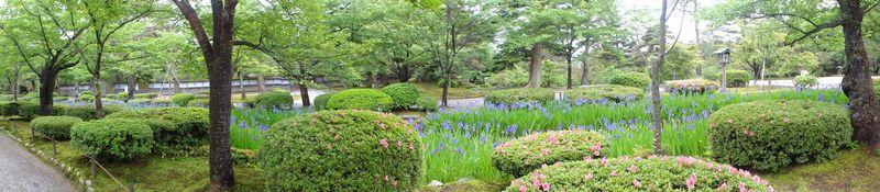 Iris et azalées dans le jardin de Kanazawa