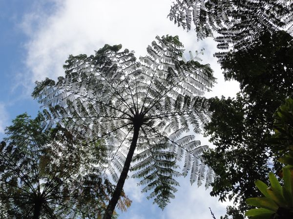 Jardin tropical de Balata, Martinique